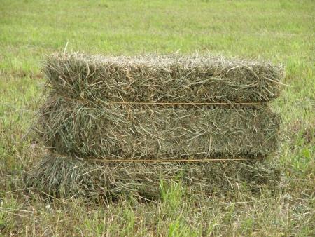 hay field: Hay balla sul set di un campo.