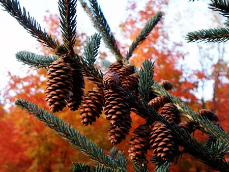 Pine cones in front of a bright and colorful background.