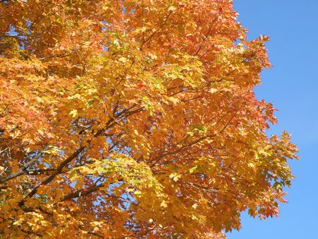 shadowed: Bright leaves on a clear sunny day. Colorful autumn changes at their peak. Stock Photo