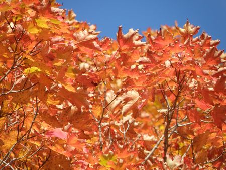 Bright leaves on a clear sunny day. Colorful autumn changes at their peak. Stock Photo - 5710728