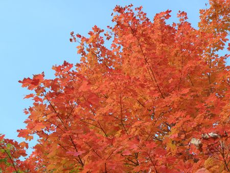 Bright leaves on a clear sunny day. Colorful autumn changes at their peak. Stock Photo - 5710731