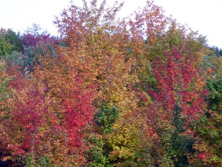 Bright leaves on a clear sunny day. Colorful autumn changes at their peak. Stock Photo - 5710788