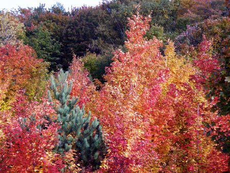 Bright leaves on a clear sunny day. Colorful autumn changes at their peak. Stock Photo - 5710791