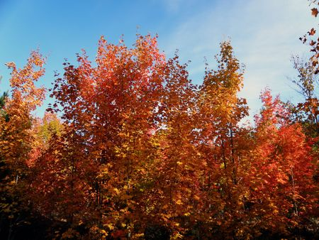 Bright leaves on a clear sunny day. Colorful autumn changes at their peak. Stock Photo - 5710775