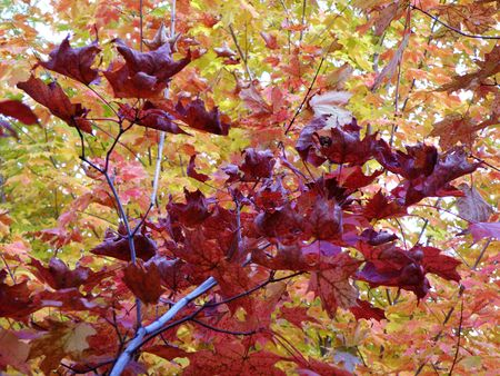 Bright leaves on a clear sunny day. Colorful autumn changes at their peak. Stock Photo - 5710746