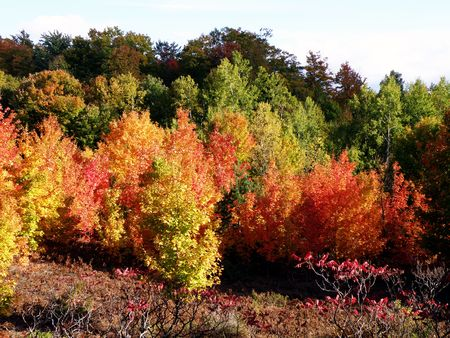 Bright leaves on a clear sunny day. Colorful autumn changes at their peak. Stock Photo - 5710789