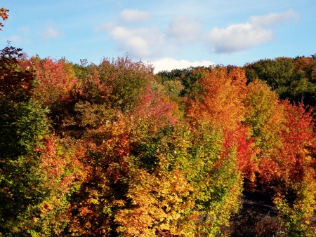 Bright leaves on a clear sunny day. Colorful autumn changes at their peak. Stock Photo - 5710786
