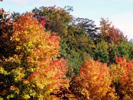 Bright leaves on a clear sunny day. Colorful autumn changes at their peak. Stock Photo