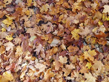 Looking down at fresh autumn leaves laying on the ground.