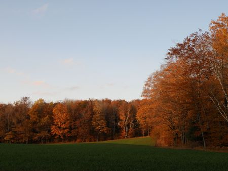glows: A setting sun sets the fall leaves ablaze. Vibrant color and lighting.