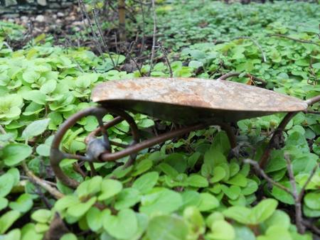 wheelbarrow and oregano ( side veiw)