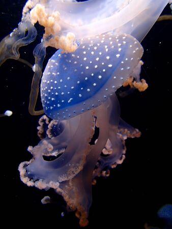 Jellyfish Stok Fotoğraf - 131820630
