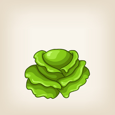 green hand: Cute vector green hand drawn isolated cabbage