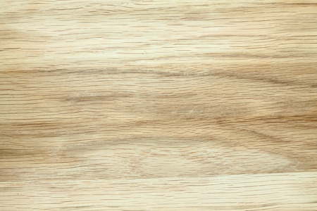 beech tree texture Stock Photo