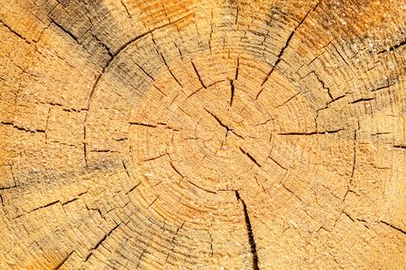 sawn: Sawn pine texture