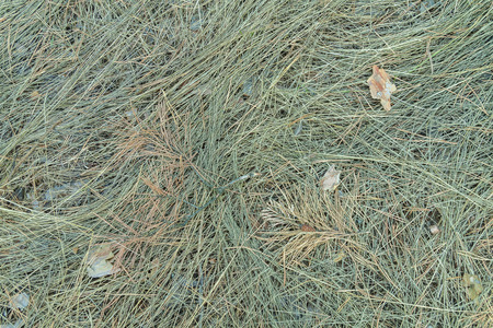 trampled: The grass in the forest. Top view. Nature wallpaper. Trampled grass Stock Photo