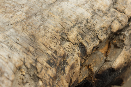 charred: texture of an old tree without bark. charred wood Stock Photo