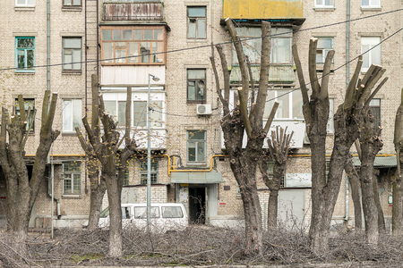 boughs: Trees with cut boughs in the courtyard of an apartment house