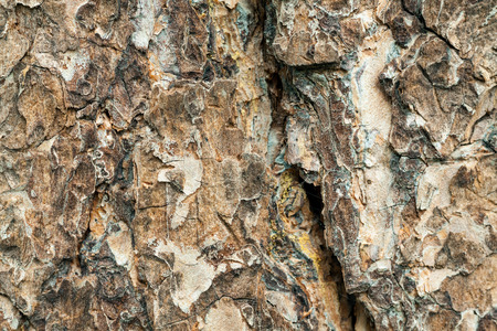 log off: texture of pine bark