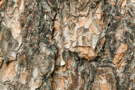 log off: texture of pine bark