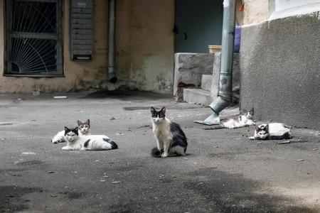 Five street cats