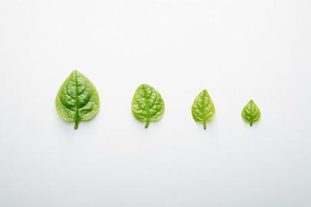 descending: Leaves in descending order