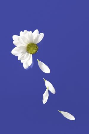 花びら: Flower petals