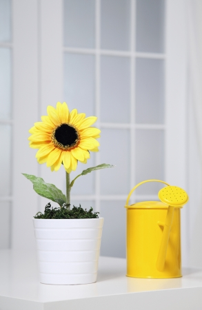 A watering can beside a pot of sunflower photo