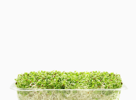 Bean sprouts Stock Photo - 24931867