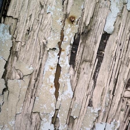 tatty: Close up of tatty wood Stock Photo