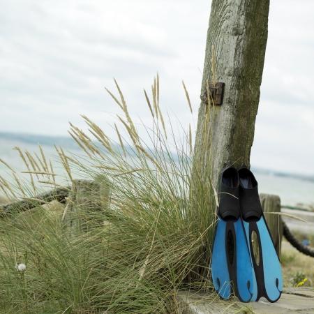 flippers: Aletas azules