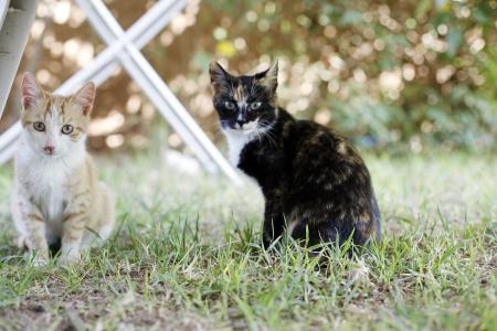 Cats looking at camera, outdoor