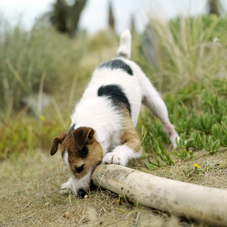sniffing: Dog sniffing around Stock Photo