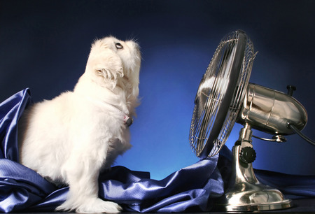 Dog looking up while standing in front of a table fan