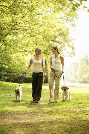 Women and their dogs walking taking a stroll in the park photo