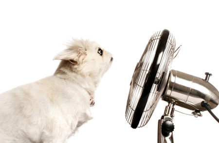 Hond zit achter een tafel ventilator
