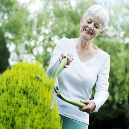 Senior woman pruning bush with hedge clippers photo