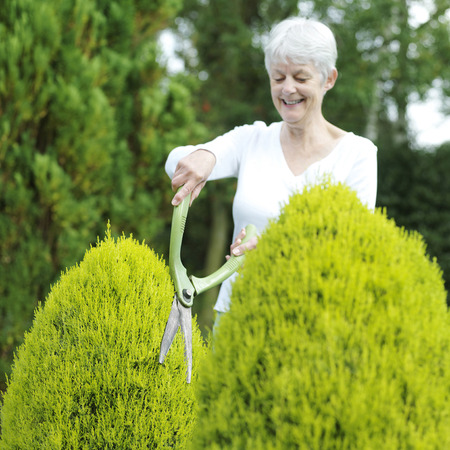 hedge clippers: Senior woman pruning bush with hedge clippers