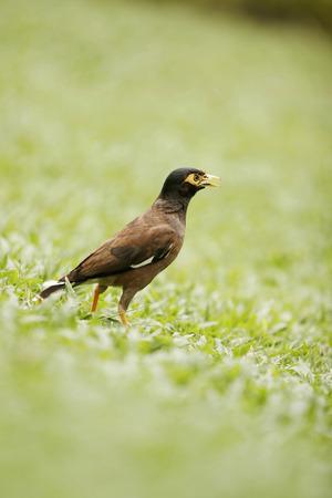 Bird on the field Stock Photo