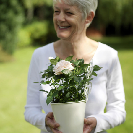 Senior lady holding a pot of rose photo