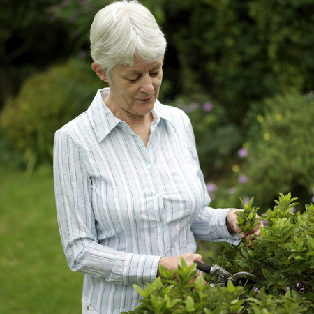 Senior woman trimming plant photo