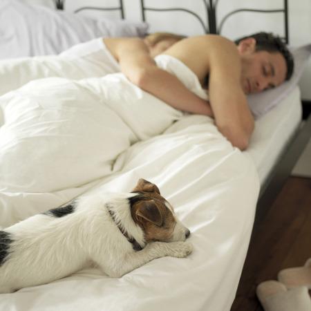 uomini maturi: Coppia a letto con il loro cane sul letto Archivio Fotografico