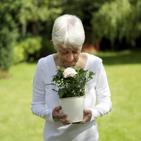 A senior lady smelling the rose Stock Photo - 26257497