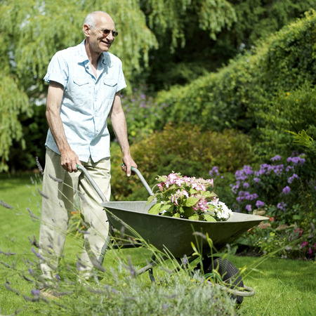 Senior man doing yard work Stock Photo - 26263051