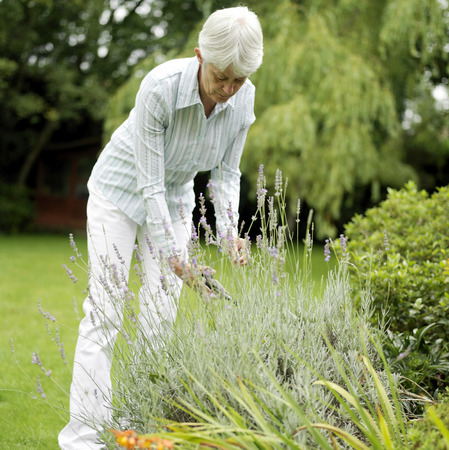 Senior woman gardening Stock Photo - 26257110