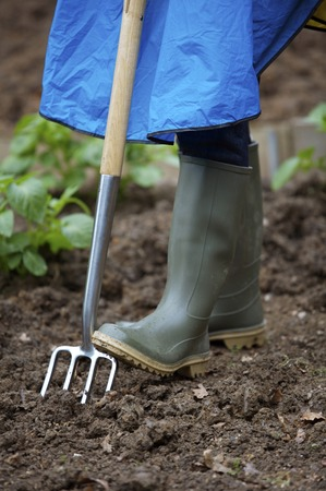 spading fork: Pushing spading fork into ground with boot