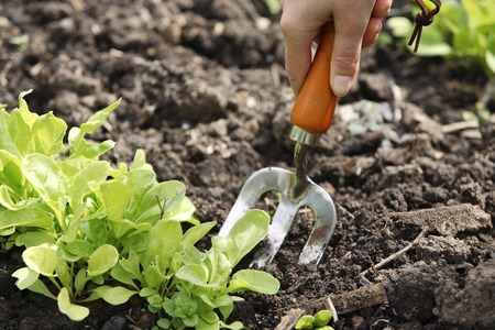 Working with spading fork in community garden