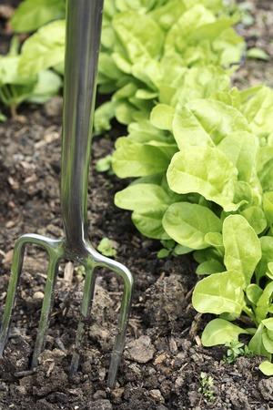 spading fork: Spading fork in community garden