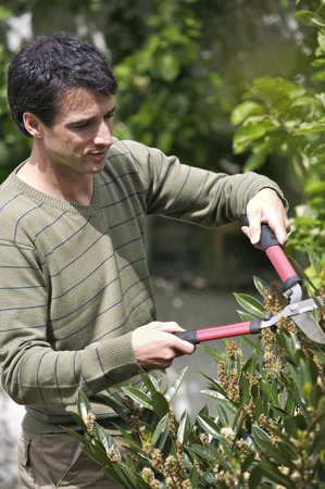 hedge clippers: Man trimming plants with a hedge clippers