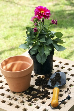 Flower pots, flower and hand trowel in the garden photo